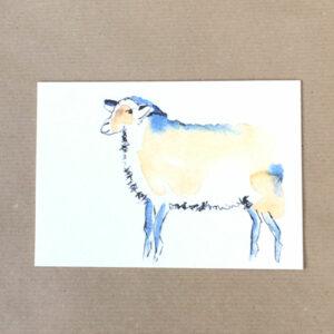 karte sheep